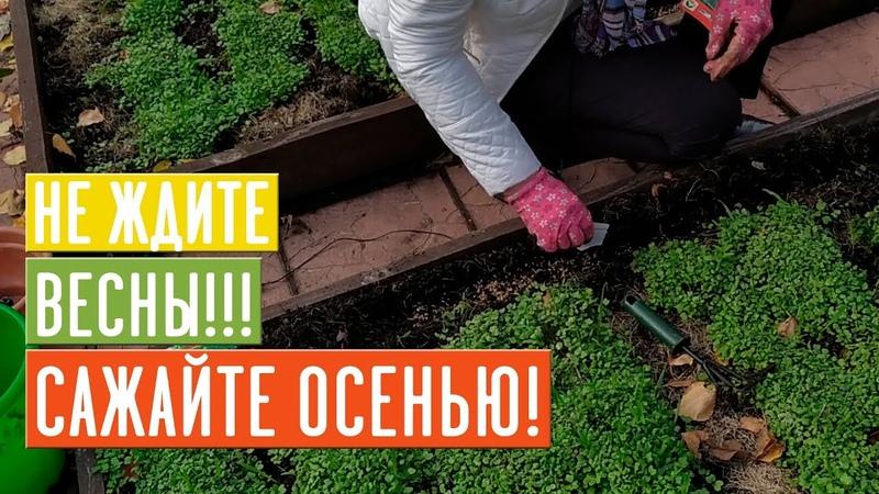 ПОДЗИМНИЙ ПОСЕВ 🌱 Что сажаем Список культур технология посадки Садовый гид