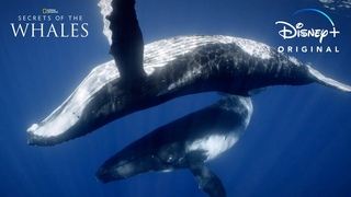 Dive In   Secrets of the Whales   Disney+