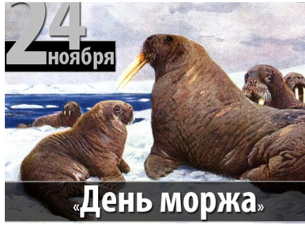 Осенние картинки, открытки с моржами