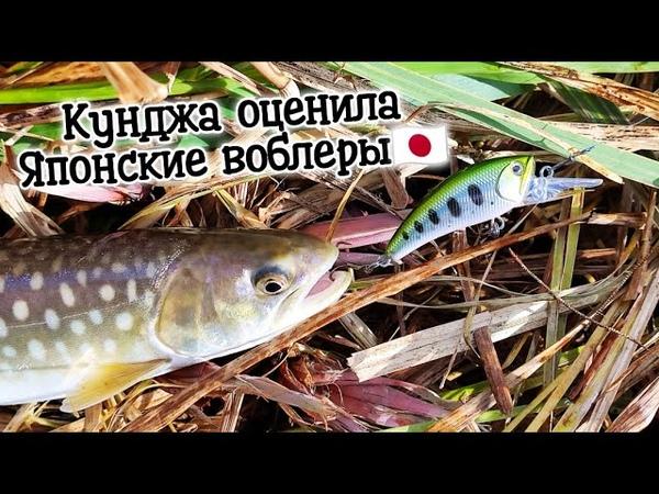 Рыбалка в устье озера Тунайчи D3 Custom Lure's воблеры