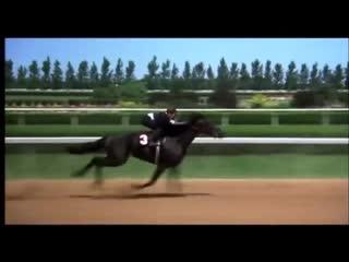 The black stallion final race