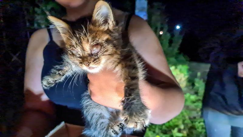 Слепой котенок ночью выбрался из ямы чтобы просить о помощи Котенка в темноте услышали дети
