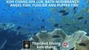 Koh chang hin luk bath, nudibranch, angel fish, fusilier and puffer fish Thailand Diving Pattaya