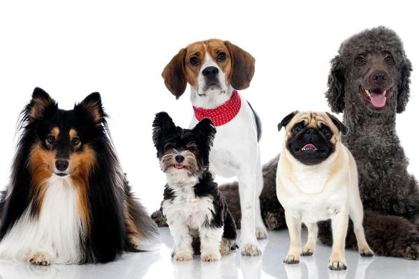 Дрессировка собак защита хозяина в Уфе