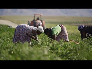 Ангола: как удалось поднять ферму с нуля в пандемию?