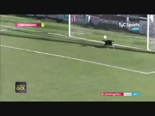 Пёс выбежал на поле и спас от гола