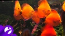 В Надыме рыбы помогают определить прогноз погоды и качество местной воды