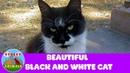 Красивый черно-белый кот.