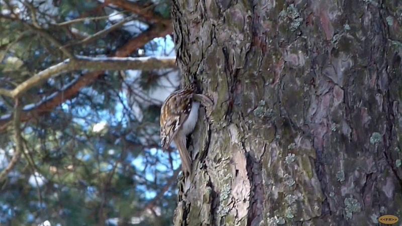 Видео обзор: Пискарёвский лесопарк февраль 2018 года
