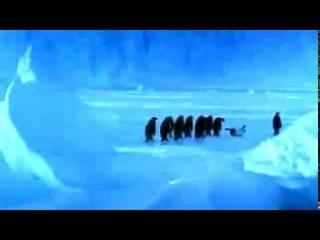 Пингвин упал