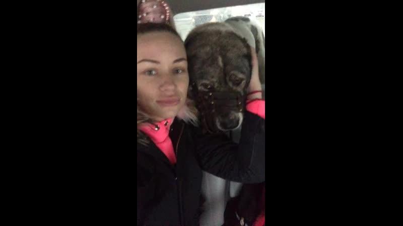 Маня едет на стерилизацию на Базу реабилитации животных НСО Кольцово