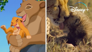 Just Two Minutes of Really Cute Baby Animals   Disney+