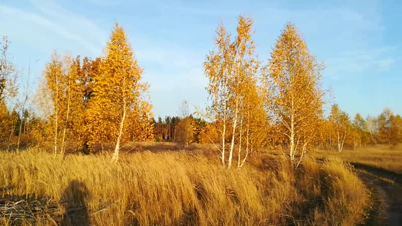 Лесостепь Закат Осень