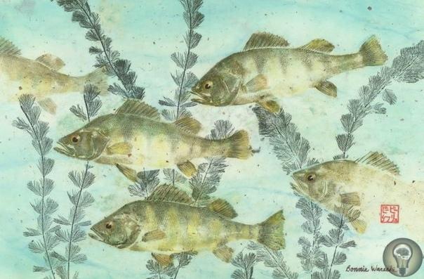 Рисование рыбами Всем известно, что японцы большие выдумщики. Вот и в искусстве они изобрели свое собственное направление. Гетаку это традиционный метод рисования... рыбами (вернее, скорее