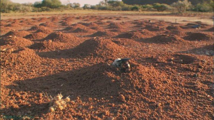 BBC Жизнь 06 Насекомые Познавательный природа животные 2009