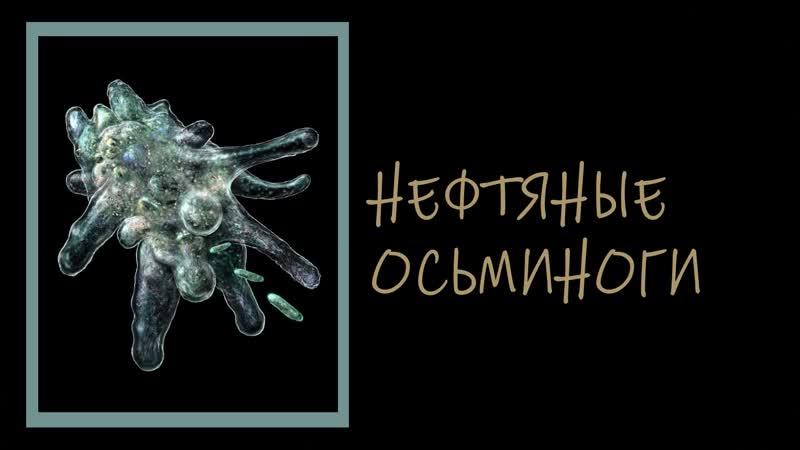 Неизвестные Животные Планеты Земля 166 Нефтяные Осьминоги