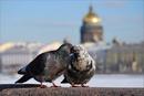 Фотоальбом Игоря Клёстова