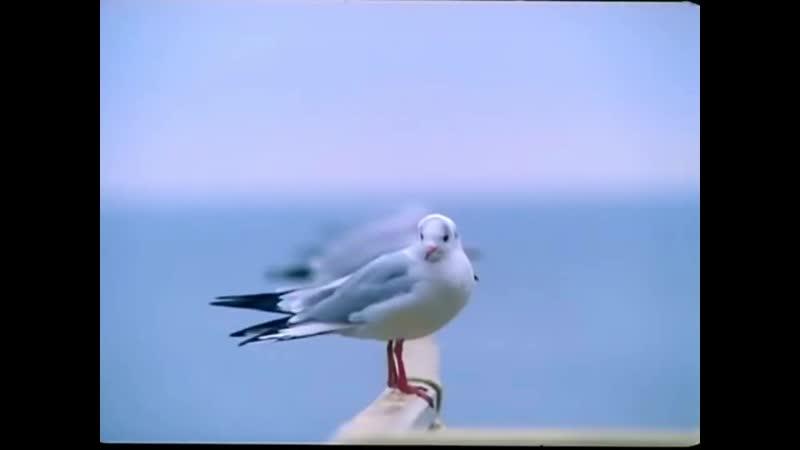 Пан или пропал сериал 2003г