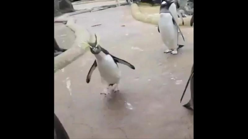 Гифка с пингвином про пятницу может
