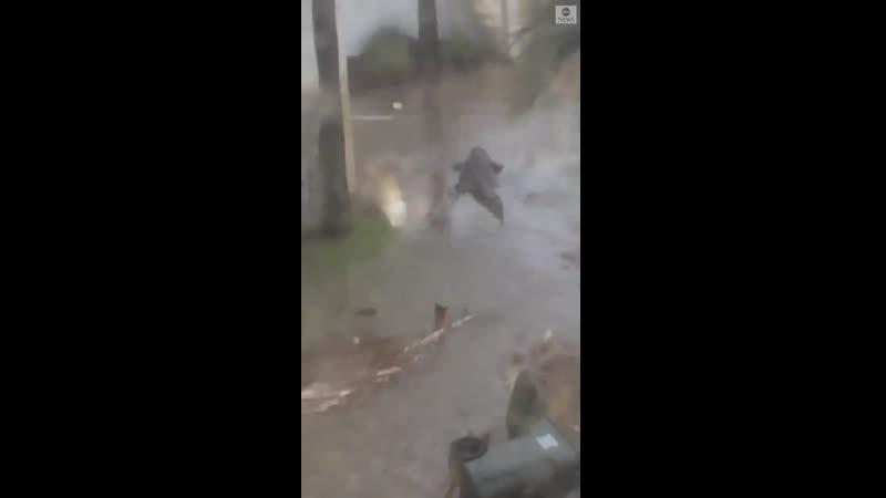 Американцы сняли на видео страшную рептилию в своем дворе после урагана