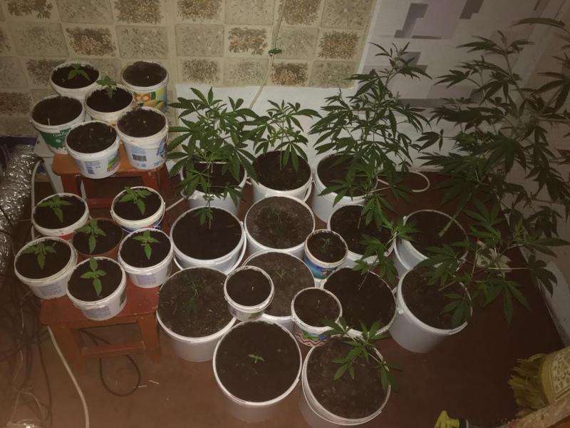 В частном доме жителя КЧР нашли плантацию конопли