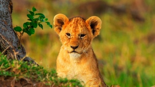 Животное Царство ...