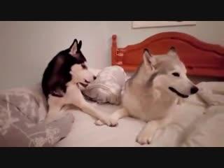 Doggos have a serious talk