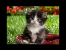 котята ассасины