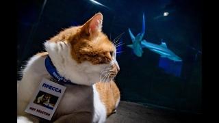 Как кот Мостик инспектировал старейший аквариум России - видео