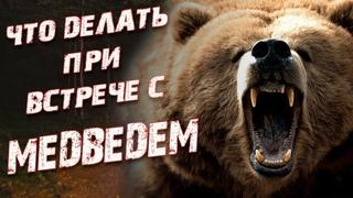 Что делать при встрече с медведем? Как защититься от медведя?
