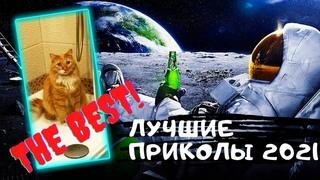 Лучшие приколы 2021  Смешные видео  Подборка приколов №5 Приколы с животными и людьми на Funny Video