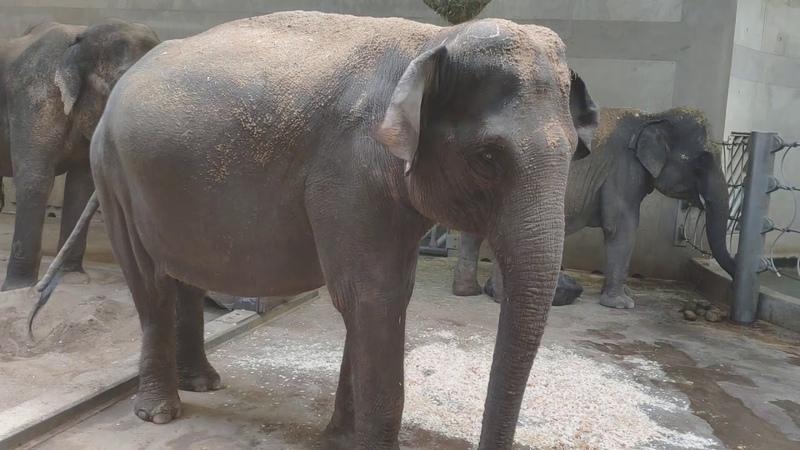 Speciál Slůně se poprvé setkalo se slonicemi Gulab a Shanti Martin Kristen