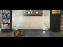 Cachorro tenta roubar livro de Elena Ferrante e viraliza na web