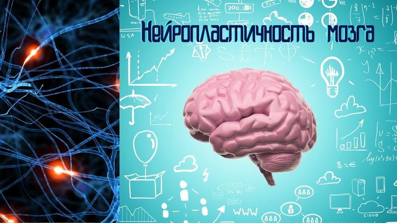 Нейропластичность или Наш мозг любит учиться