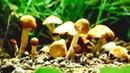 Неразгаданные тайны грибов. Документальный фильм 2019