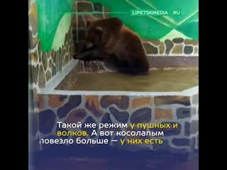 Пять способов освежиться от липецкого зоопарка