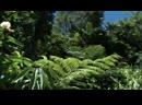 BBC Тайны Тихого океана 5 Странные острова