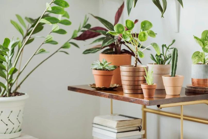 🌱🌸🌱Как подготовить комнатные растения к зиме.🌱🌸🌱