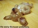 Фотоальбом Александра Панченкова