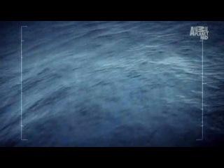 Ролик программы Sea Shepherds Китовые войны