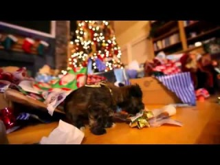 Puppy Marry Christmas