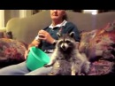 Енот моет окно ! Raccoon washes a window ! Funny raccoon ! A cool videos about raccoons 1