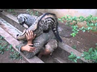 African Civet Cat Group Hug