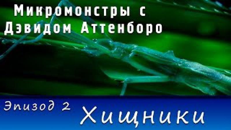 Микромонстры с Дэвидом Аттенборо Эпизод 2 Хищники 2013 HD 720p