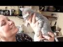 Цель 2 подарить маме кошку