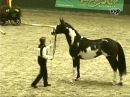 Letter Of Marque Frame Overo Thoroughbred stallion