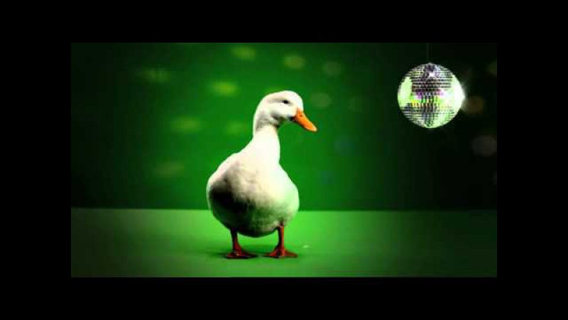 Liberad al Pato Willix Chiste Mixta