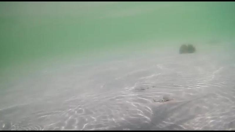 Морские обитатели 🦀😊крабикимамаявдубае
