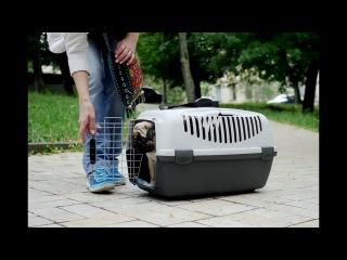 Как перевезти собаку: советы ветеринара