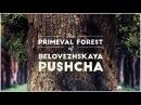 Фильм телекомпании Animal Planet Беловежская Пуща Первозданный лес